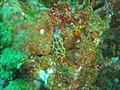 Nudibranch at Island Rock DSC04798.JPG