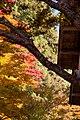 Ohara 2008-11-26 (3261975738).jpg