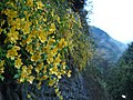 Okutama - panoramio.jpg