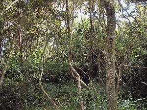 Bosque de Fray Jorge National Park - Olivillos forest