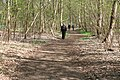 Open woodland at the beginning of the Peddars Way - geograph.org.uk - 1262115.jpg