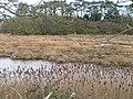 Otter river, near Budleigh Salterton - geograph.org.uk - 1020644.jpg