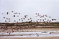 Oued Souss(js)1.jpg