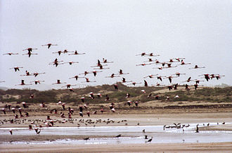 Sous River - Sous River mouth near Agadir