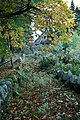 Overgrown Steps - geograph.org.uk - 597832.jpg
