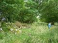 Overgrown track near Aquhorthies - geograph.org.uk - 1497754.jpg