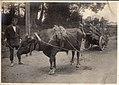 Ox-drawn cart in Japan (1914 by Elstner Hilton).jpg