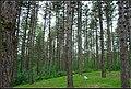 Ozren - panoramio (10).jpg