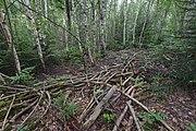 Přírodní rezervace Skalské rašeliniště (09).jpg