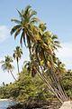 Palm Trees (4259062780).jpg