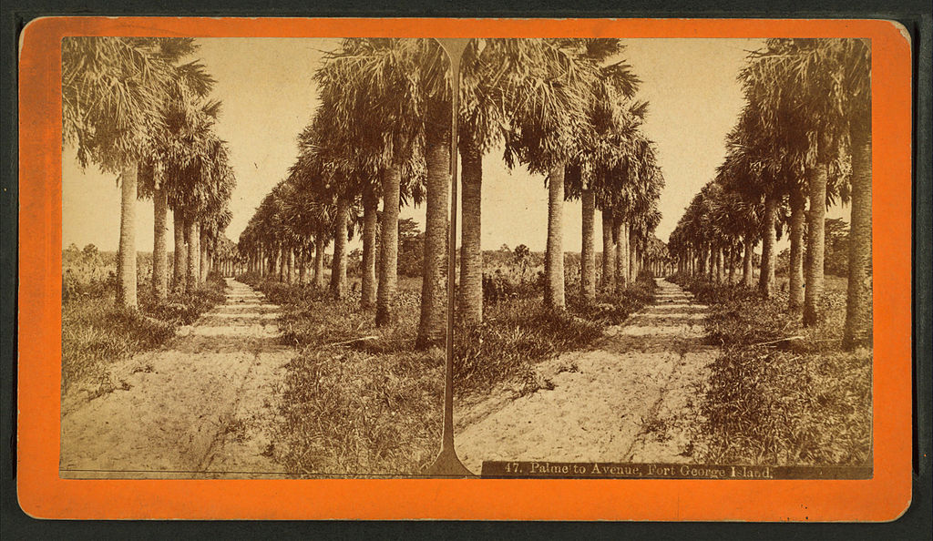 File:Palmetto Avenue, Fort George Island, from Robert N. Dennis ...