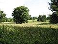 Parkland - geograph.org.uk - 867955.jpg