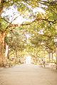 Passeio Público, vista próxima a entrada da Rua Barão do Rio Branco.JPG