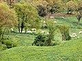 Pastures al Collsacabra - panoramio.jpg