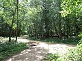 Paths in Epping Forest - geograph.org.uk - 2523531.jpg