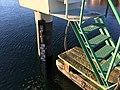 Pegel Eckernfoerde Hochwasser 2019.jpg