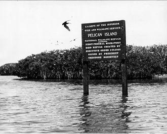 Plume hunting - Pelican Island NWR
