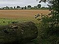 Pepperstock - Downlands Park - geograph.org.uk - 231731.jpg