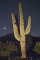 Phoenix DBG 4 saguaro.jpg