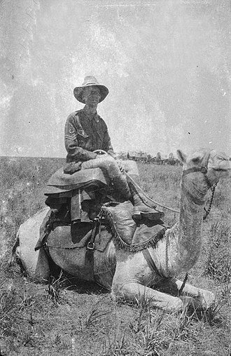 Allan George Barnard Fisher - Fisher on a camel in Palestine during army service with the Australian Army in the first world war