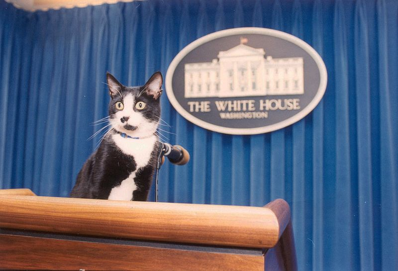 File:Photograph of Socks the Cat Standing on the Press Podium in the Press Room at the White House- 12-05-1993 (6461507867).jpg