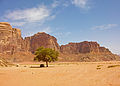 Pickup truck under the Wadi Rum tree.jpg
