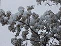 PikiWiki Israel 29210 Snow in Jerusalem.JPG