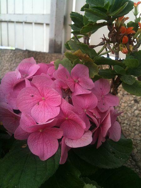 הגינה שלי