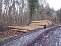 Piles of Timber - geograph.org.uk - 309428.jpg