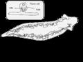 Planaria excretory system!.png