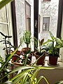 Plants in an apartment.jpg