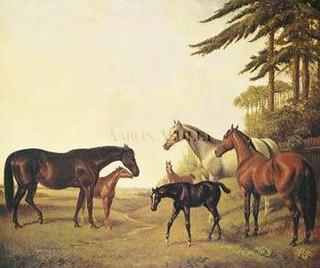 Pocahontas (horse) English Thoroughbred racehorse