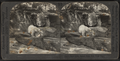Polar bear, Bronx Park, New York City, from Robert N. Dennis collection of stereoscopic views.png