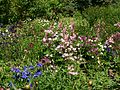 Poltava Botanical garden (111).jpg