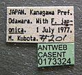 Polyergus samurai casent0173324 label 1.jpg