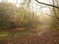 Pond, Fishpond Wood - geograph.org.uk - 2172535.jpg
