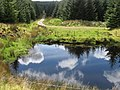 Pond at a bend in track in Dungavel forest - geograph.org.uk - 445043.jpg