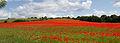 Poppies again 3 (5781338753).jpg