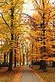 Praha, Holešovice, Stromovka, podzimní listí V.jpg