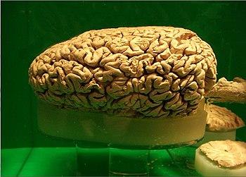 L'esprit datant Psychologie évolutive et la science émergente de la Cour de l'homme