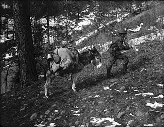 Prospecting - Prospector and burro, western Colorado, USA,  circa 1900
