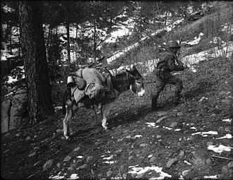 Prospecting - Prospector and burro, western Colorado, USA,  circa 1900