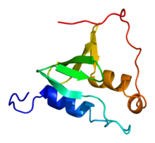 Protein GAS2 PDB 1v5r.png