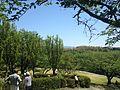Prunus persica in Miyajidake Shrine.JPG