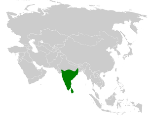 White-browed bulbul - Image: Pycnonotus luteolus distribution map