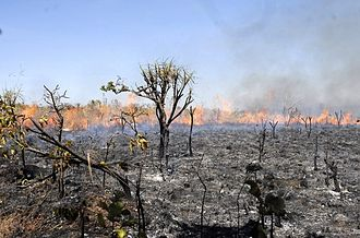 Agriculture in Brazil - Fires are one of the problems still present in Brazilian agriculture.