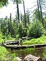 RGSP swampy.jpg