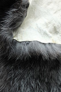 Rabbit hair fur of the rabbit
