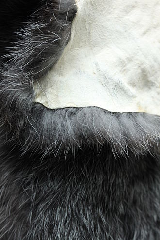 Rabbit hair - Rabbit fur clearly showing the different hairs