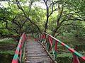 Raiganj Forest.jpg
